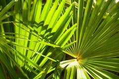 Folhas de palmeira iluminadas Fotos de Stock Royalty Free