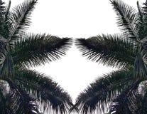 Folhas de palmeira isoladas no fundo branco ilustração do vetor