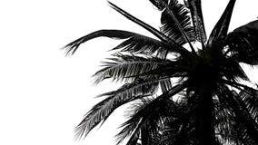 Folhas de palmeira isoladas no fundo branco foto de stock royalty free