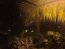 Folhas de palmeira na noite imagens de stock