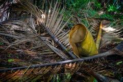 Folhas de palmeira de Nikau, Nova Zelândia fotos de stock