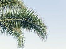 Folhas de palmeira no céu azul com espaço da cópia imagem de stock royalty free
