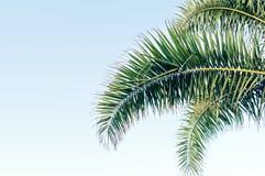 Folhas de palmeira no céu azul com espaço da cópia fotografia de stock