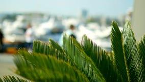 Folhas de palmeira no fundo borrado porto com os mastros brancos dos iate e dos navios no mar vídeos de arquivo
