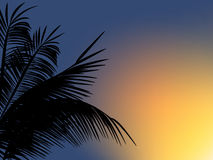 Folhas de palmeira no fundo do por do sol Imagem de Stock