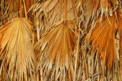 Folhas de palmeira secadas Imagens de Stock Royalty Free
