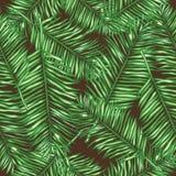 Folhas de palmeira sem emenda do fundo do vetor fotos de stock royalty free