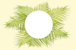 Folhas de palmeira tropicais com Livro Branco no fundo amarelo mini Imagens de Stock