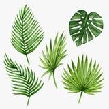 Folhas de palmeira tropicais da aquarela Vetor ilustração do vetor