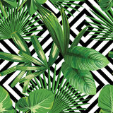 Folhas de palmeira tropicais da planta exótica da selva foto de stock royalty free