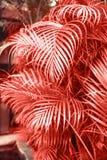 Folhas de palmeira tropicais, fundo floral do teste padrão com cor do ano imagem de stock royalty free
