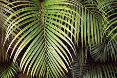 Folhas de palmeira tropicais, fundo floral sem emenda do teste padrão da folha da selva Foto de Stock Royalty Free