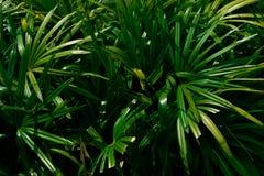 Folhas de palmeira tropicais, fundo floral verde do teste padrão foto de stock royalty free