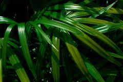 Folhas de palmeira tropicais, fundo floral verde do teste padrão fotos de stock royalty free