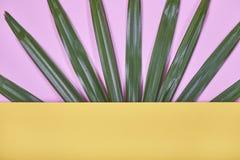 Folhas de palmeira tropicais no fundo amarelo e cor-de-rosa pastel Fotos de Stock Royalty Free