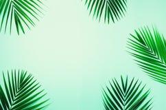 Folhas de palmeira tropicais no fundo azul pastel Conceito mínimo do verão Configuração lisa criativa com espaço da cópia Vista s fotos de stock