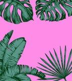 Folhas de palmeira tropicais no fundo cor-de-rosa Conceito mínimo do verão da natureza Configuração lisa Vetor tropical das folha ilustração stock