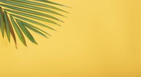 Folhas de palmeira tropicais verdes no fundo amarelo com luz solar Configuração lisa criativa do verão mínimo foto de stock royalty free