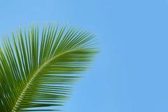 Folhas de palmeira verdes Foto de Stock Royalty Free
