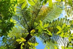 Folhas de palmeira verdes bonitas na selva do ` s de Nova Zelândia Imagem de Stock