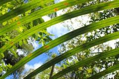 Folhas de palmeira verdes frescas na selva do ` s de Nova Zelândia Fotos de Stock