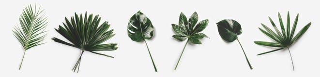 Folhas de palmeira verdes isoladas no fundo branco imagens de stock