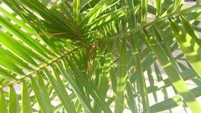 Folhas de palmeira verdes video estoque
