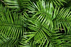 Folhas de palmeira verdes no teste padrão do fundo na floresta imagens de stock royalty free