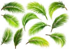 Folhas de palmeira Vetor Imagem de Stock Royalty Free