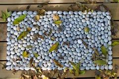 Folhas de pedra de Capet do teste padrão fotografia de stock royalty free