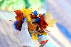 Folhas de plátano à disposição, outono dourado, folhas varridas Imagem de Stock