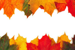 Folhas de plátano coloridas do outono Foto de Stock