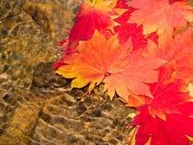 Folhas de plátano da queda Fotografia de Stock Royalty Free