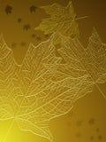 Folhas de plátano do ouro Foto de Stock