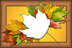 Folhas de plátano do outono Fotos de Stock