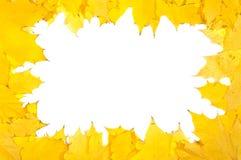 Folhas de plátano do outono Foto de Stock