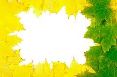 Folhas de plátano do outono Fotos de Stock Royalty Free