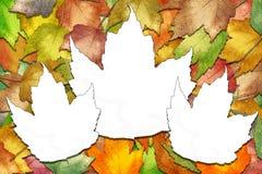 Folhas de plátano do outono com espaços brancos da folha Fotografia de Stock Royalty Free