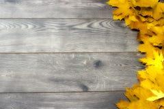 Folhas de plátano douradas Fotografia de Stock