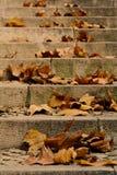 Folhas de plátano em uma escada Fotografia de Stock