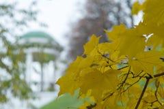 Folhas de pl?tano amarelas fotografia de stock