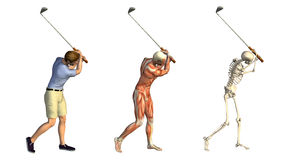 Folhas de prova anatômicas: Balanço do golfe ilustração stock