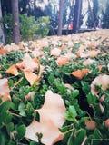 Folhas de queda imagem de stock