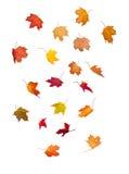 Folhas de queda Imagem de Stock Royalty Free