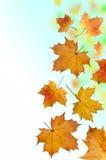 Folhas de queda Fotografia de Stock Royalty Free