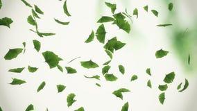 Folhas de queda da nogueira-do-Japão ilustração do vetor
