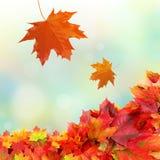 Folhas de queda da queda imagens de stock