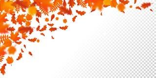 Folhas de queda do autumanl do teste padrão da queda da folha do outono no fundo transparente do vetor ilustração do vetor