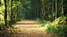 Folhas de queda, floresta, paisagem, outono filme