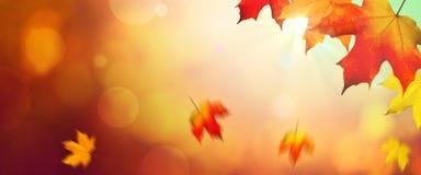 Folhas de queda no outono fotos de stock royalty free